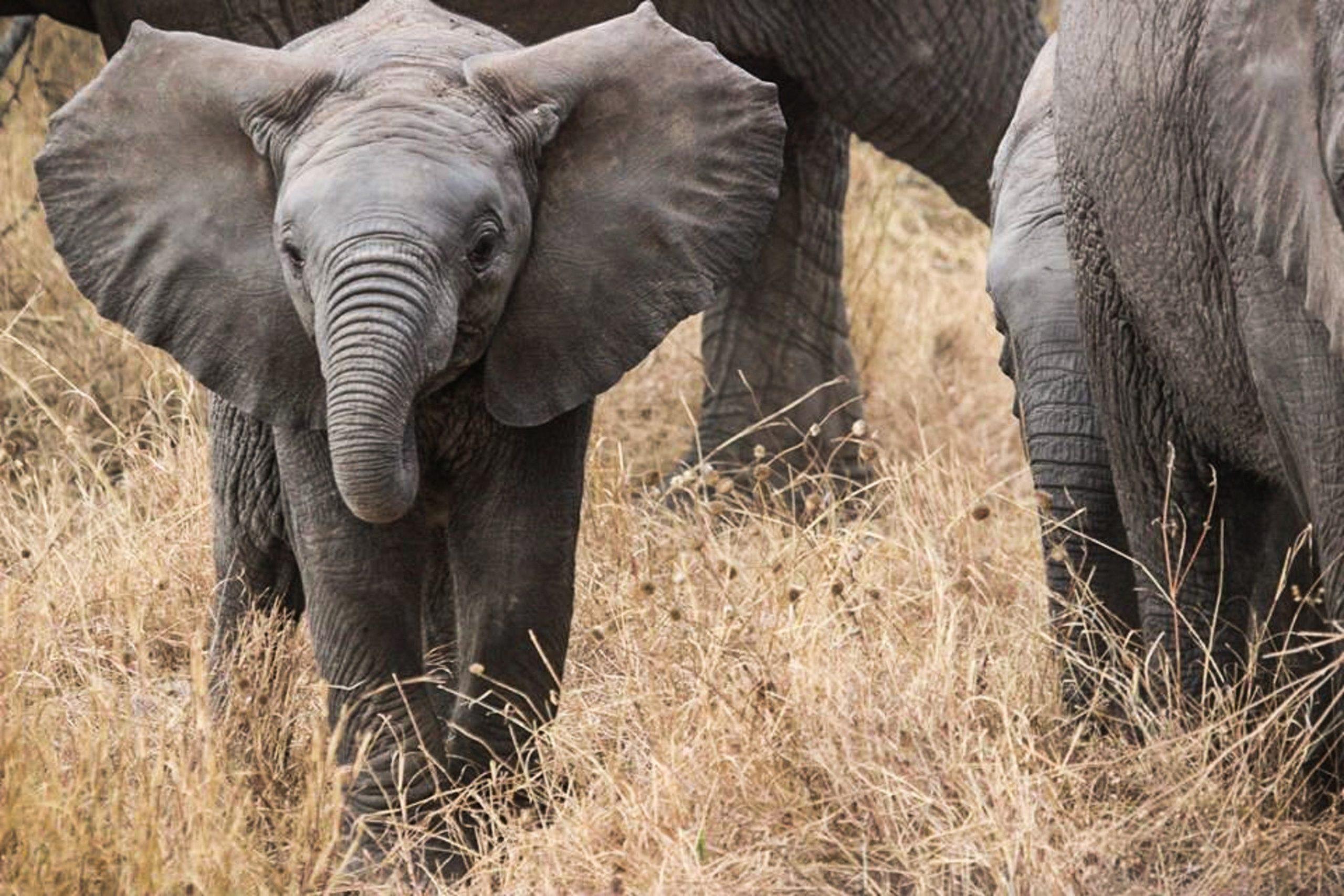 baby elephant bigfive coworking